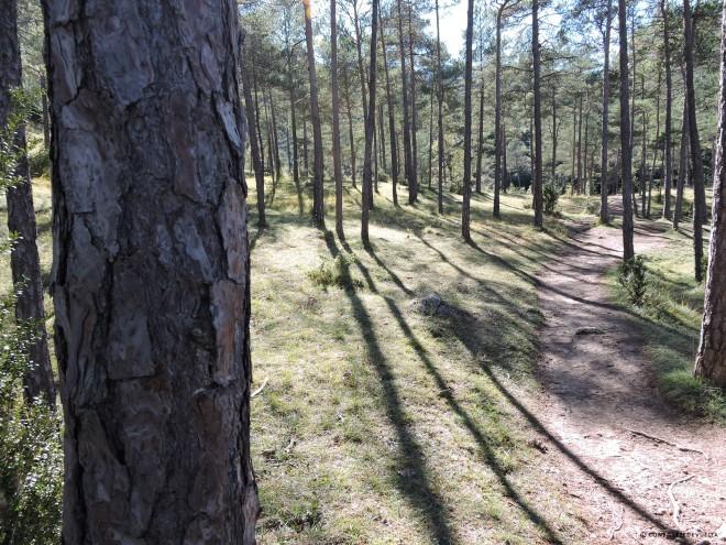 Camino entre el bosque, cercano a la localidad catalana de Campdevànol